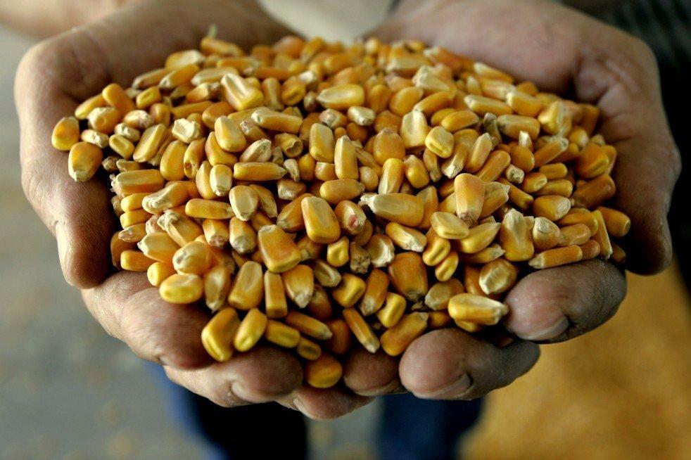 изъяли кукурузу