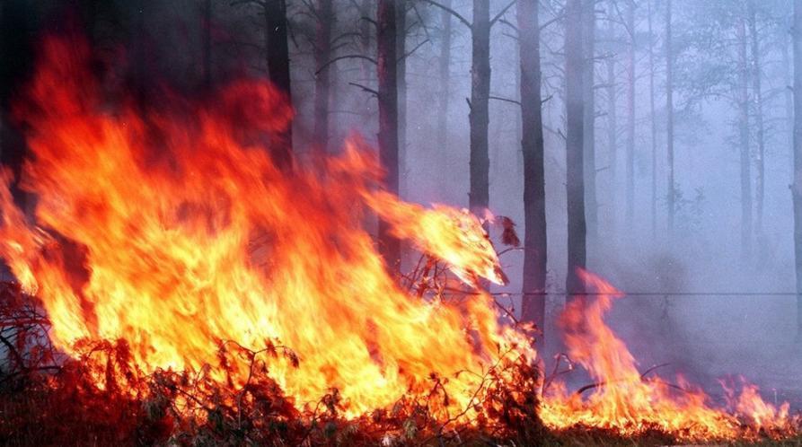 лесной пожар успенское