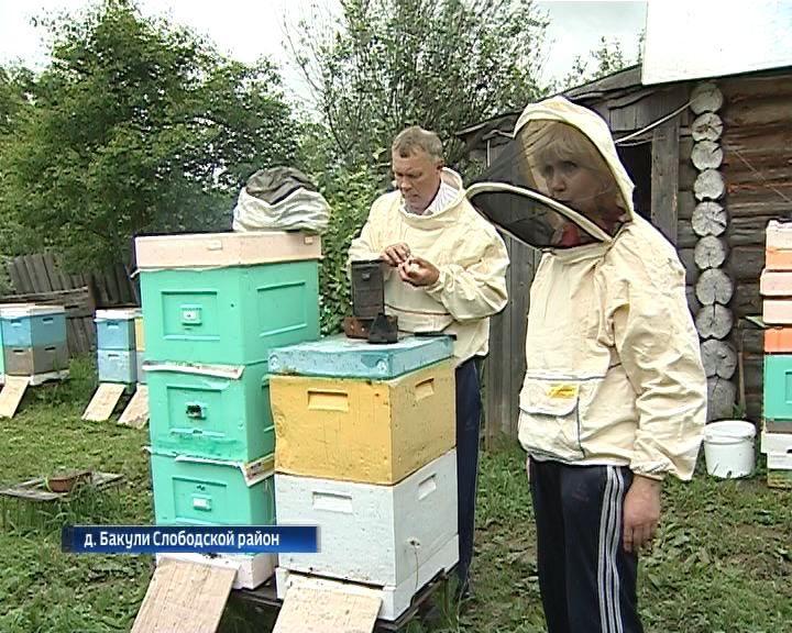 Семья Сапожниковых из Слободского района получила грант на развитие пчеловодства