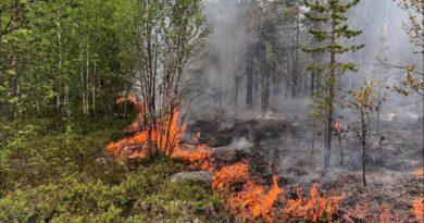 В Слободском районе произошёл лесной пожар